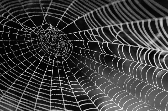 a spider web showing what links are like